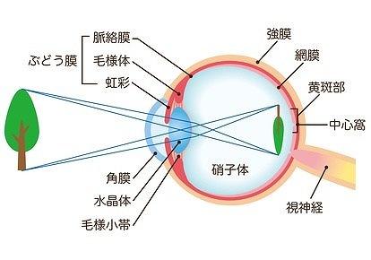 白内障と目の仕組み